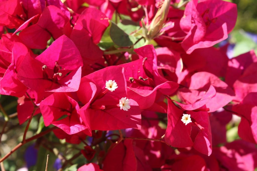 Natur; Blumen (2)